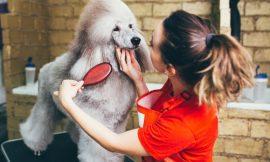 Curso Peluqueria Canina: Los 5 Ideales para Nuestras Mascotas